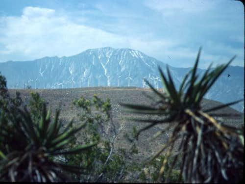 San Jacinto, taken late May...