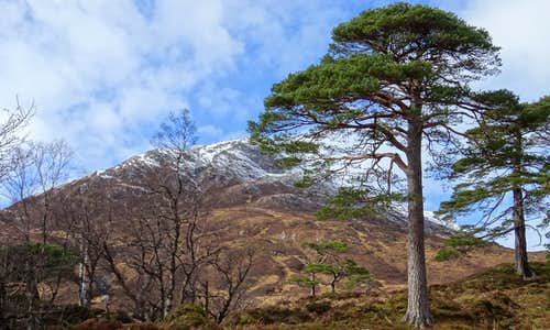 Sgurr na Lapaich 1036m and Scots Pines