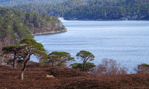 Typical Glen Affric scenery