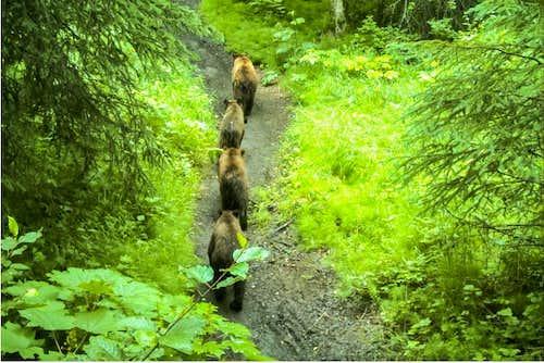 Rover's Run Bears