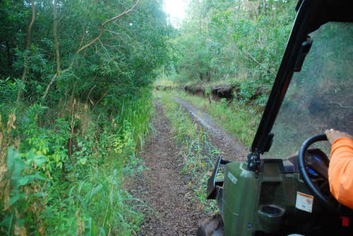 Typical section of road to Kaulalewelewe