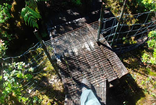 Wild pig fence (for little pigs)