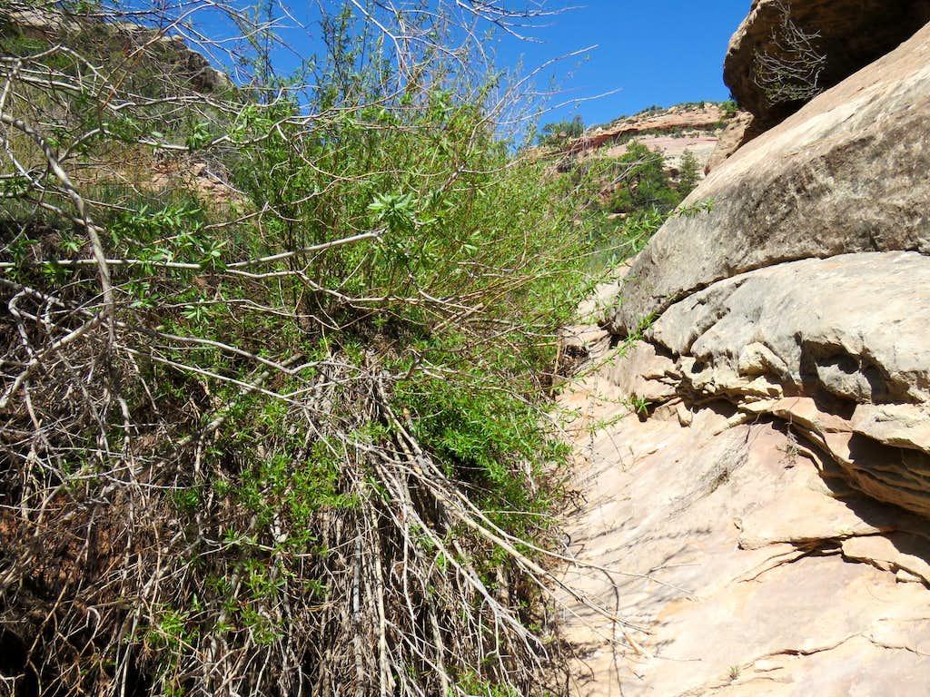 Short section of bushwhack