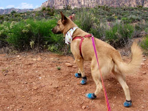 Presley In His Desert Hiking Costume
