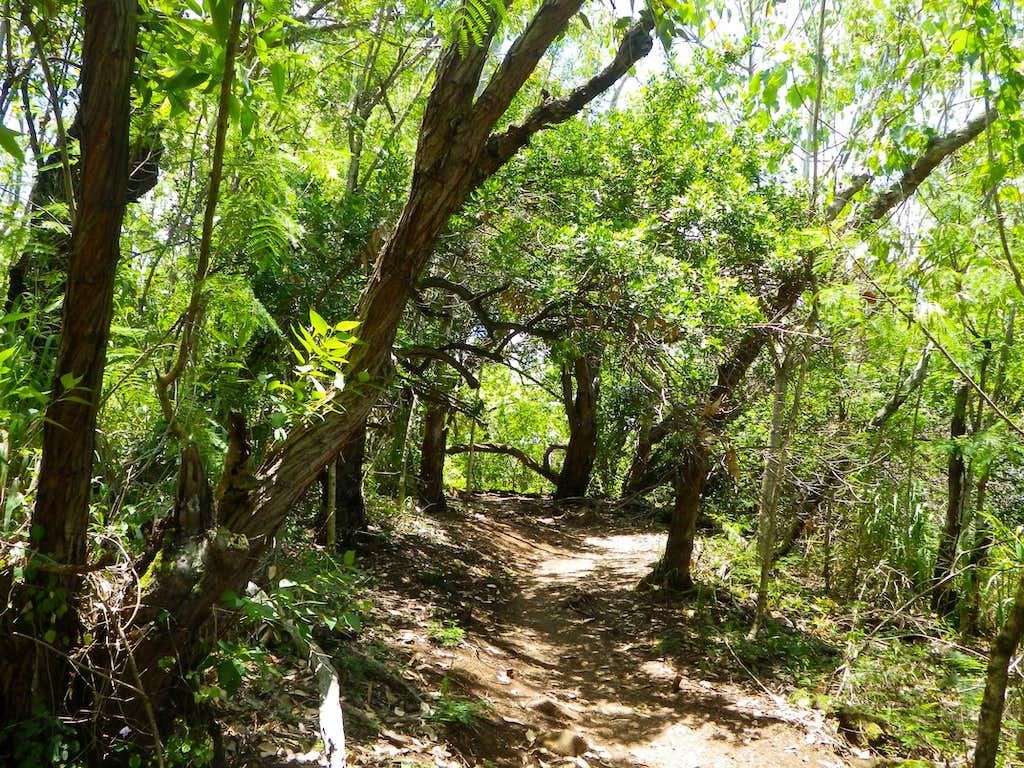 Nounou Trail Scenery