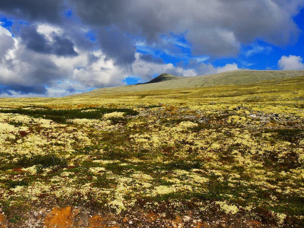 Colorful lichens along the approach to Rondvassbu Hut