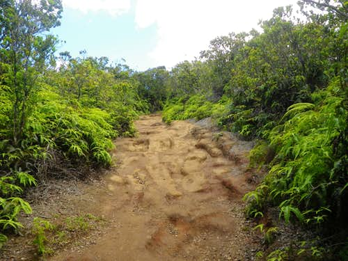 Fun Trail